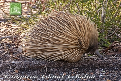 attractions-echidna
