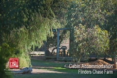 flinders-chase-farm-cabin-accommodation-view-trees-600