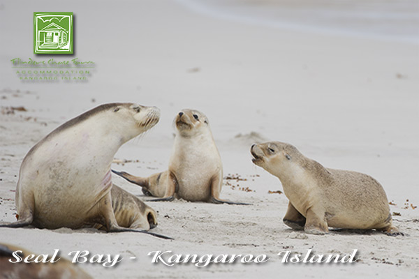 attraction-seal-bay2