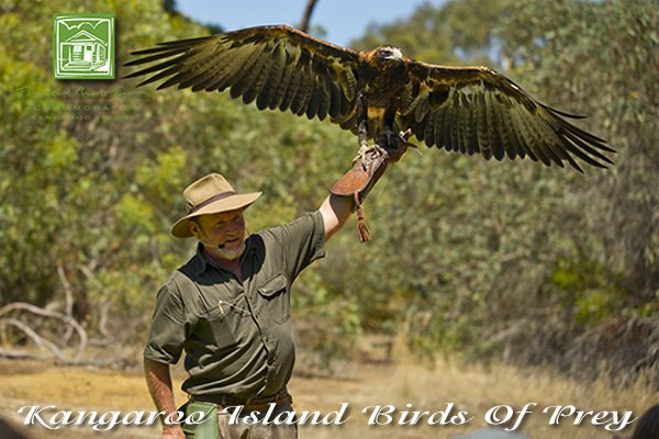 attractions-birds-of-prey-eagle