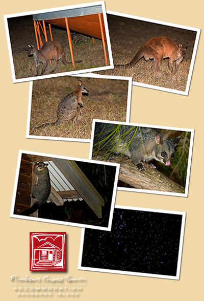 Wildlife at Flinders Chase Farm